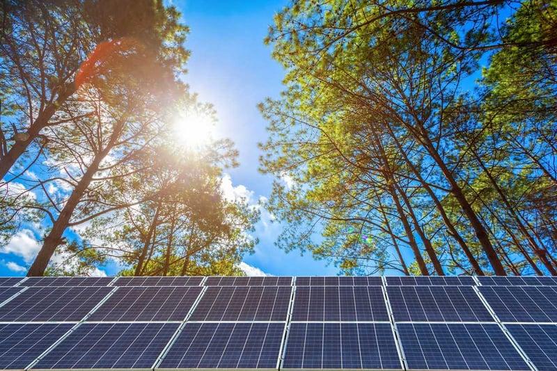Drawdown Georgia- Solar with trees