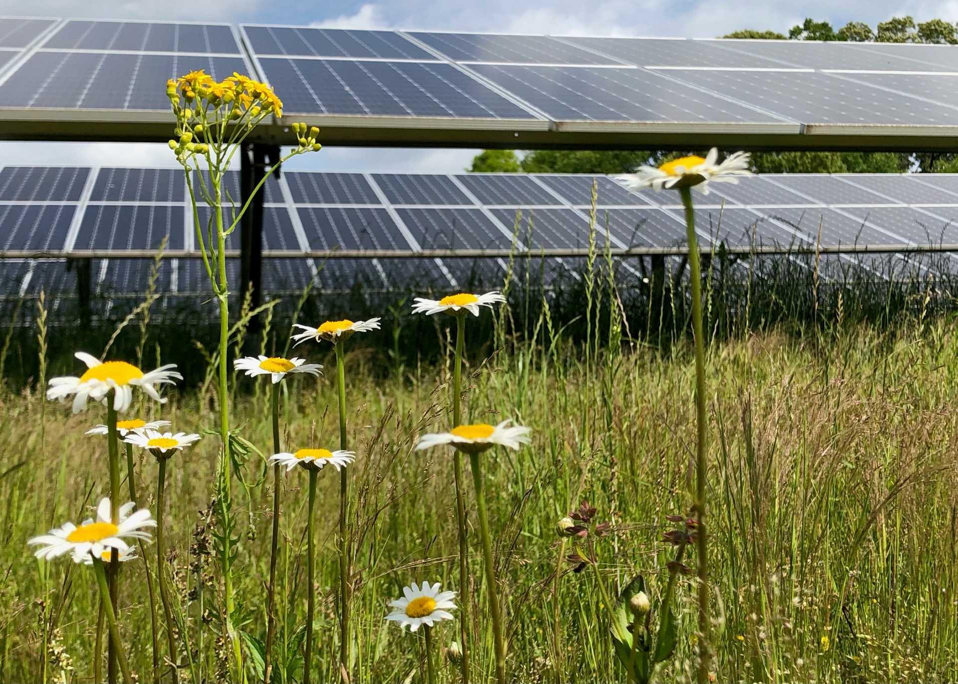 Drawdown Georgia- The Ray Pollinator Friendly Solar